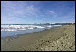 New Zealand Beach Kite